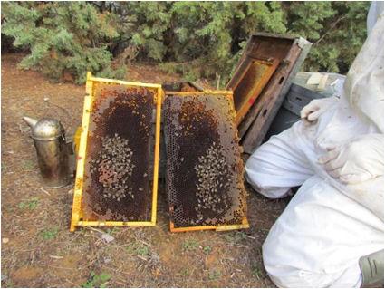 Jornada Patología de las abejas