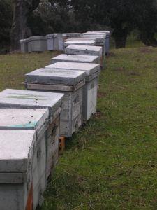 venta de colmenas layens